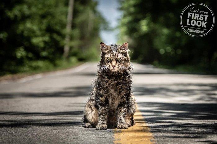 pet-sematary-remake-cat-churchill-1137225