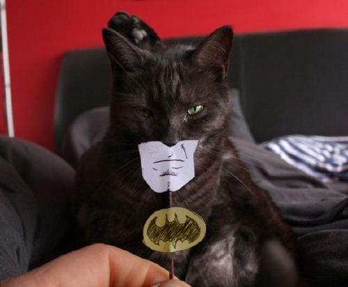 batman-cat